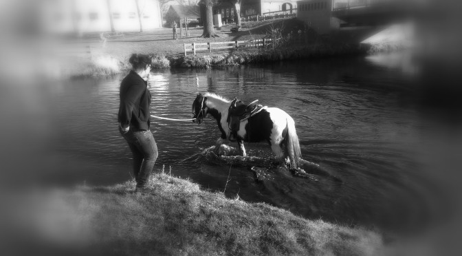 Warum hat mein Pferd Angst vor Wasser ?