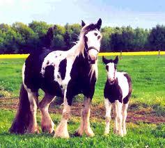 Kids und Pferd
