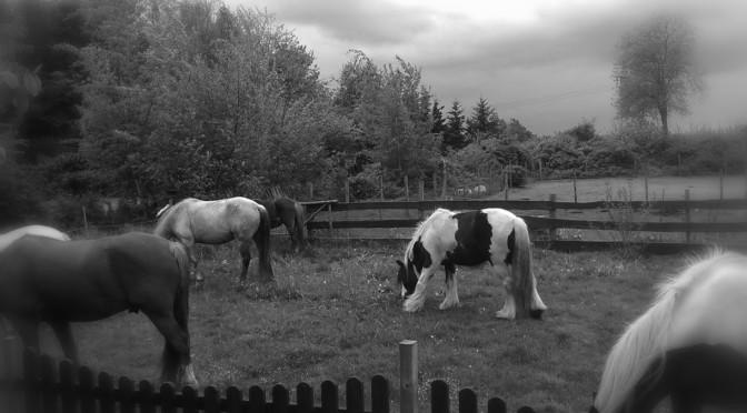 von Pferden lernen